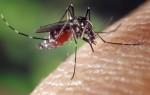 Раствор соды от укусов комаров