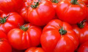 Как правильно применять соду для защиты помидор от фитофторы