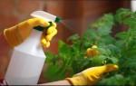Пищевая сода для огорода или сада – незаменимый спасатель дачника