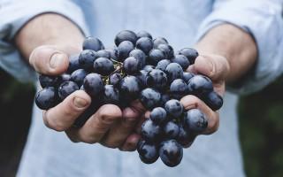 Обработка виноградника пищевой содой от болезней во время созревания